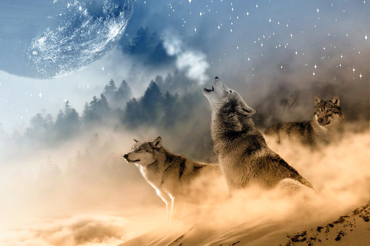 Die Wolfsnächte